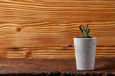Succulents in diy concrete pot. Only planted in pots. On wooden background.