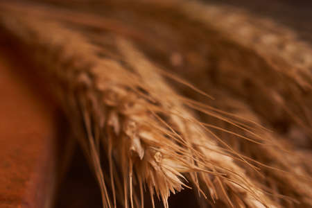Organic Whole wheat lying on bread on black background with copy space