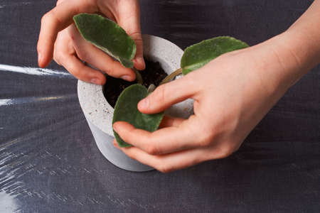 plante violette dans un pot en béton fait main dans la décoration de la chambre Banque d'images