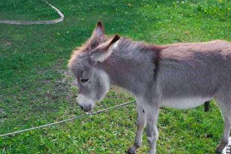 Donkey eating grass in the garden in summer day