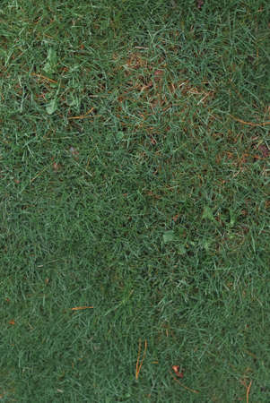 Green grass texture background in park Imagens