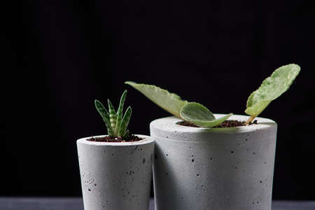 violet plant in handmade concrete pot in room decoration Imagens