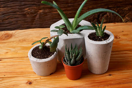 succulent plant in handmade concrete pot in room decoration Imagens