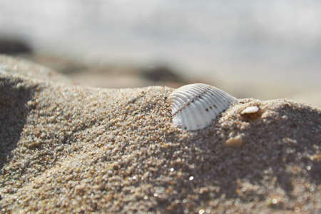 Shells in the sand on the beach background Stok Fotoğraf - 124772465