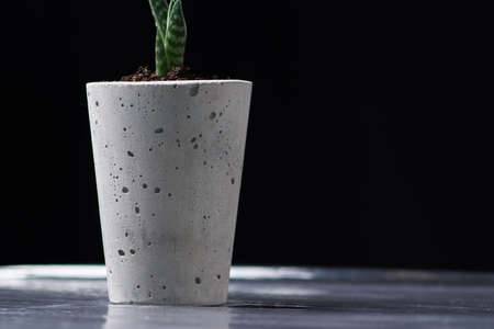 Succulents in diy concrete pot. Only planted in pots. On black background. Stockfoto