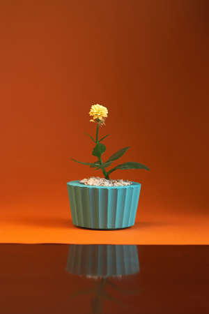 pot with plant gerbera isolated on orange background. 写真素材