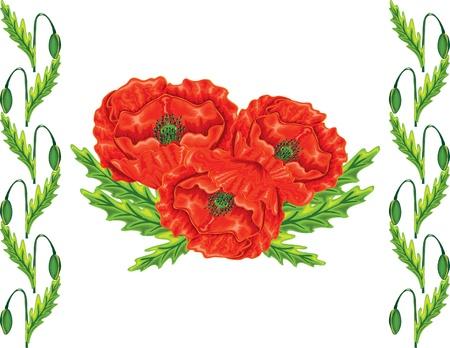 red poppy summer flowers elemeny for design Vector