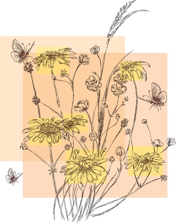 camomile flower: hand drawn flowers and butterflies Illustration