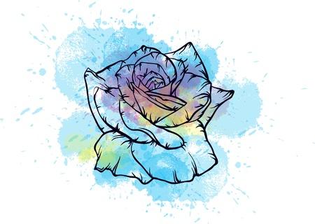 blue roses: blue watercolor rose Illustration
