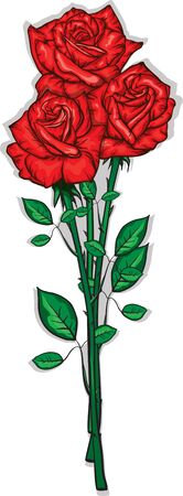 bouquet of red roses Vector