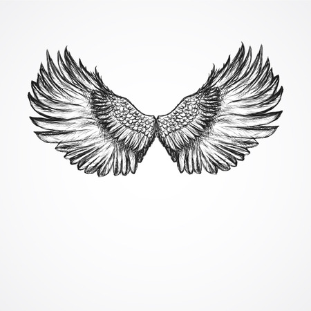 winged: hand drawn artistic wings Illustration