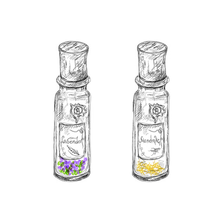 apothecary: hand drawn apotechary flasks with mandrake root and lavender dried herb Illustration