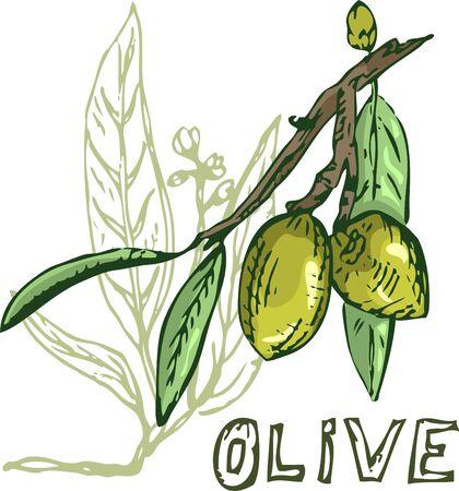 elemento de olivo para el diseño