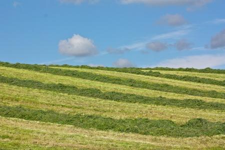 wharfedale: Cosecha de heno, Grassington, Wharfedale, Yorkshire, UKe Foto de archivo