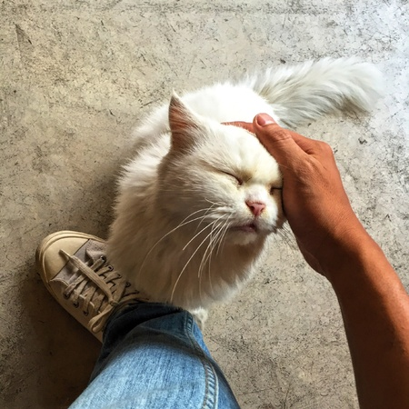 white: The White Cat Stock Photo