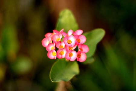 eventide: Flower