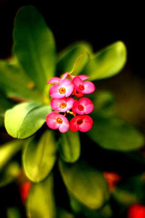 Flower Stock Photo - 19403937