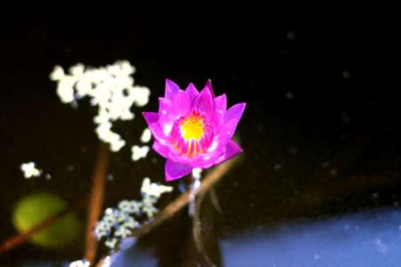 Flower Stock Photo - 19905032