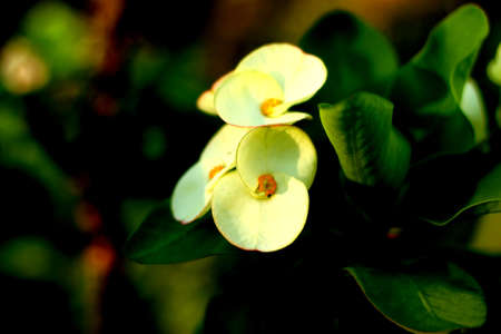 Flower Stock Photo - 19905017