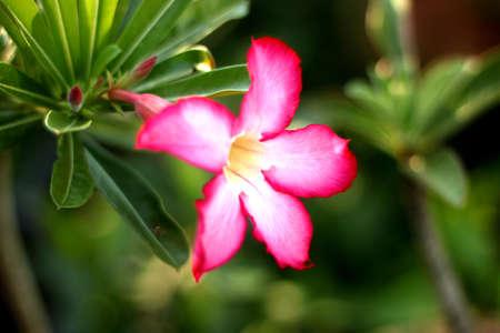 Flower Stock Photo - 19905083