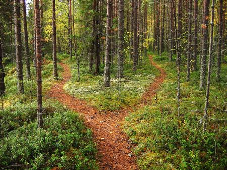 forest trail: Crossroads in the Karelian forest