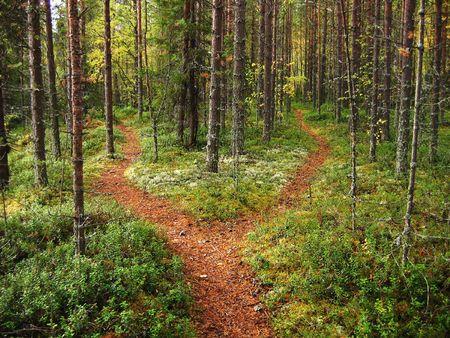 crossroads: Crossroads in the Karelian forest