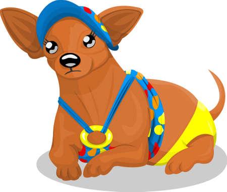 cartoon chihuahua: Chihuahua in bikini Illustration