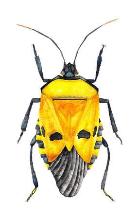 faced: Yellow Bug