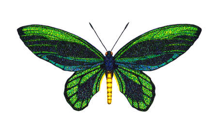 pointillism: Queen Alexandra Birdwing Stock Photo