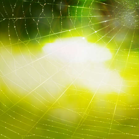 A vector background with a spiders web in water drops. Vector
