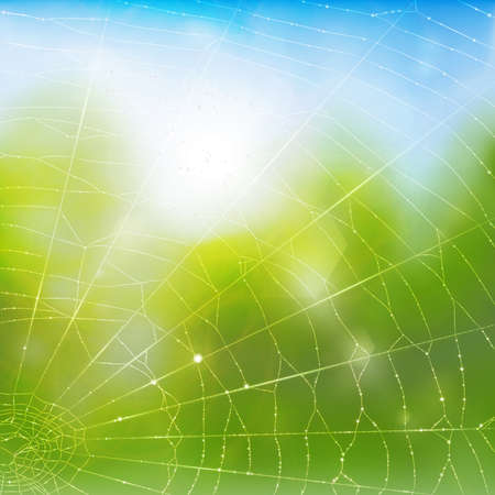 cobwebby: A vector background with a spiders web in water drops. Illustration