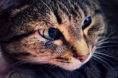 cheerless: An emotional portrait of a crying cat.