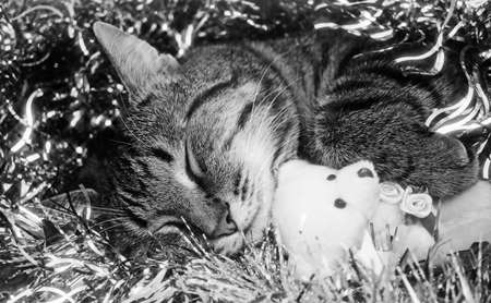 A retro portrait of a sleeping cat holding a teddy bear on tinsels background. photo