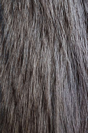 racoon: Racoon fur texture Stock Photo