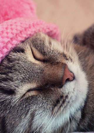 snoozing: Sleeping cat in a pink hat