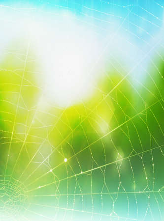A background with a spiders web photo