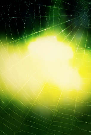 spider's web: A background with a spiders web