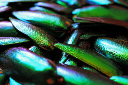 entomological: Metallic wings texture