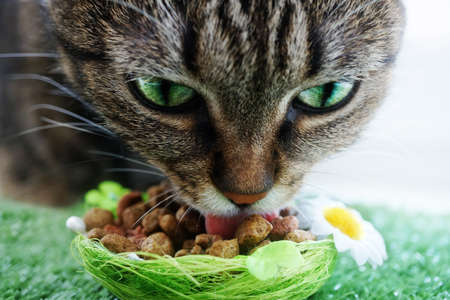 cat eating: cat eating Stock Photo