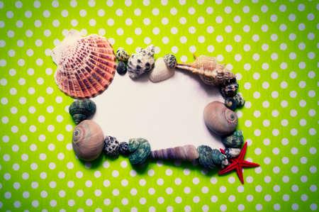 cushion sea star: Frame with seashells