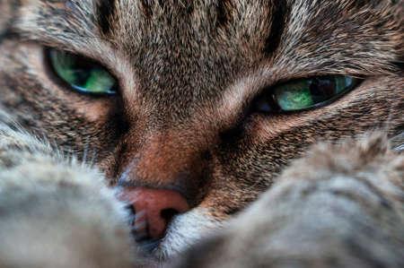 cheerless: Portrait of a sad cat Stock Photo