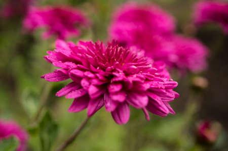 moisten: flower background Stock Photo