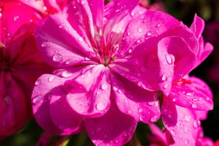 rainwater: floral background