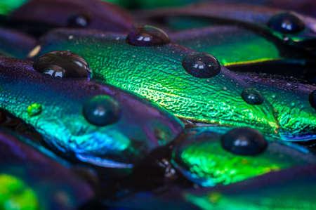 rainwater: Metallic wings background
