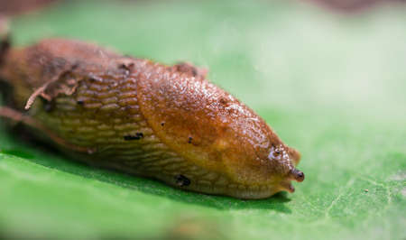 slug: Lingote en la hoja Foto de archivo