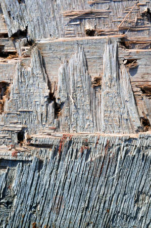 roughly: rough wooden background