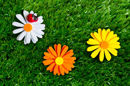 A summer background with a ladybug, flowers, grass.