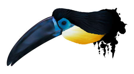 Channel-billed toucan illustration Illustration