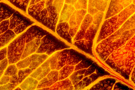 An autumn leaf texture, which looks like lava. The photo was taken by two lenses as the one lens and stacked into the one clear photo.