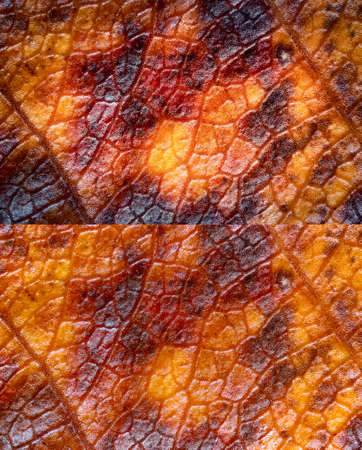 Two autumn leaf textures, which look like leather or skin of a lizard or a dragon. The photos were taken by two lenses as the one lens and stacked into the one clear photo. Extreme macro.